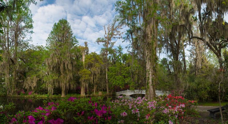 Spring at Magnolia Plantation