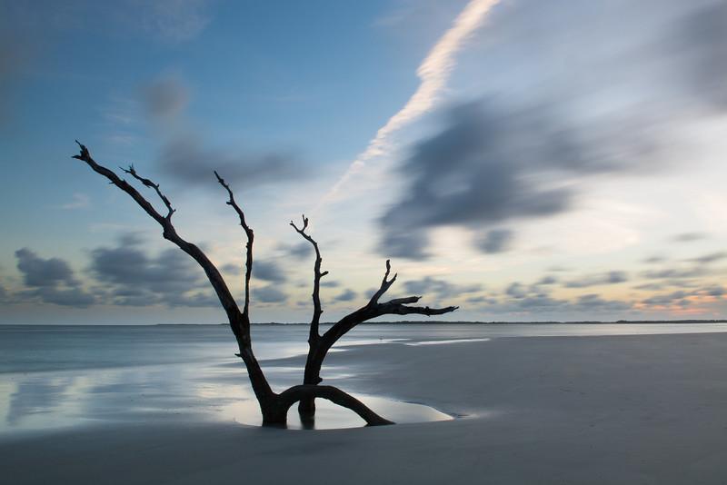 Dead Tree At Folly Beach