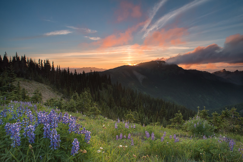 Hurricane Ridge Sunset
