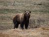 Bear 399