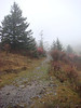 We really enjoyed the hike in the misty rain along the Appalachian trail.  We hiked until we reached an elevation of one mile.