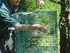 Hummingbird trap.  Photo by Melanie Swick.