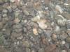 Chub mound (gravel nest)