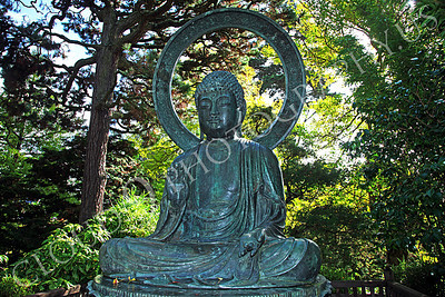 STY - BUDDHA 00002 A peaceful looking Buddha statue under the shade of large trees, by Peter J Mancus