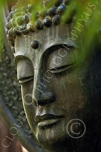 STY - BUDDHA 00021 A tight crop study of the face of a Buddha statue, behind blurred bamboo leaves, by Peter J Mancus