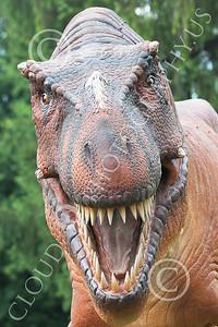 STY - AN 00019 Close up of an open jaw replica Tyrannosaurus rex dinosaur, by Peter J Mancus
