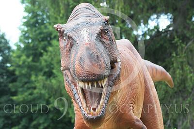 STY - AN 00003 Close up of an open jaw replica Tyrannosaurus rex dinosaur, by Peter J Mancus