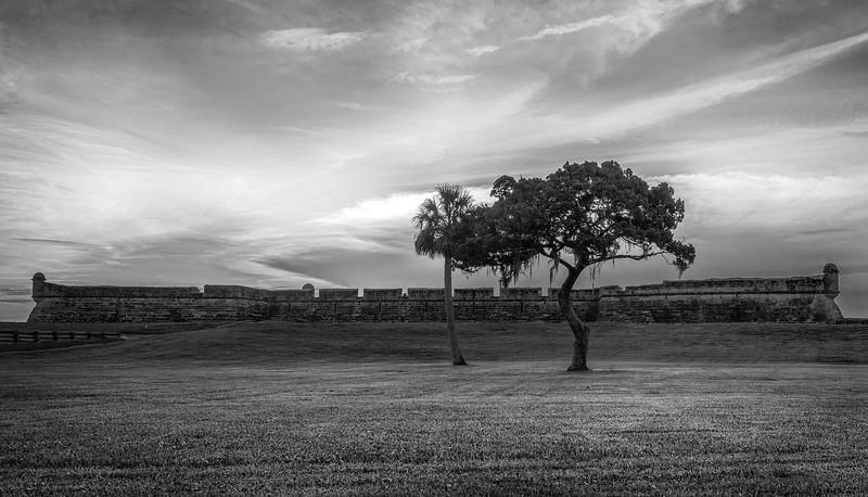 Castillo de San Marcos Tree