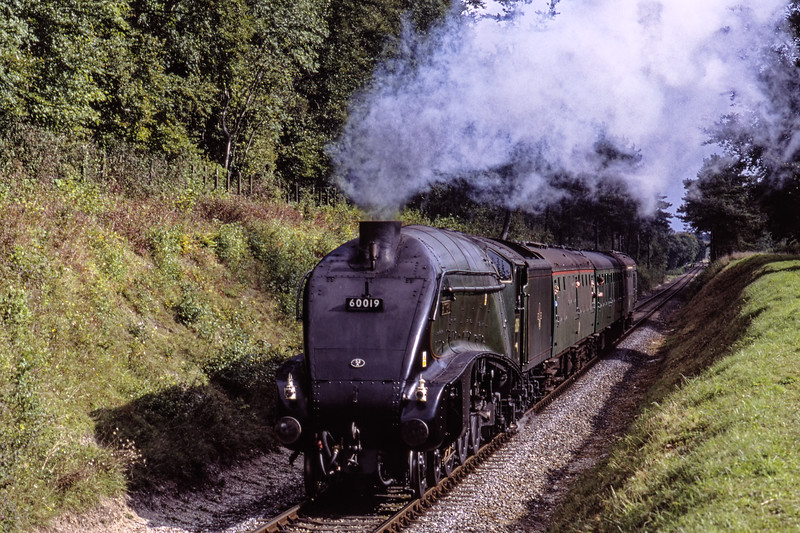 """A4 No. 60019 """"Bittern"""" passes through the pine tress, with the 10:21 Alton - Alresford, <br /> on 13th September 2009. Scanned Transparency."""