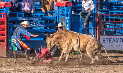 As the cowboy hits the ground, the bull turns on him!  The courageous clowns go to work to divert the bull's attention away from the cowboy!