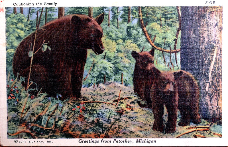 Greatings From Petoskey Michigan Postcard S-418