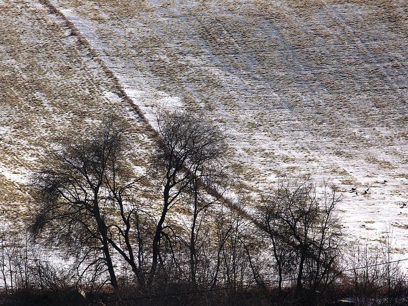 Bergsvingen, Øvre Eiker 22.2.2015<br /> Canon 5D Mark II + Tamron 150 - 600 mm 5,0 - 6,3