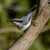 Spettmeis / Eurasian Nuthatch <br /> Jensvoll, Lier 12.10.2013<br /> Canon EOS 7D + EF 100-400 4,5-5,6 L