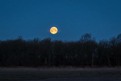 Fullmåne / Full moon<br /> Hou, Danmark 23.3.2016<br /> Canon 7D Mark II + Tamron 150 - 600 mm 5,0 - 6,3
