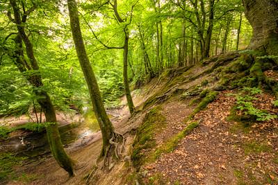 Lellinge skov