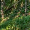 Holtnesdalen, Hurum 3.6.2018<br /> Canon 5D Mark IV + EF 50mm f/1.4 USM