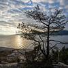 Furu og fjord / Pine and fjord<br /> Lahellholmen, Asker 28.11.2020<br /> Canon 5D Mark IV + EF17-40mm f/4L USM @ 17 mm
