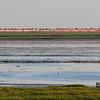 Vadefugler / Waders<br /> Vadehavet, Danmark 16.7.2014<br /> Canon EOS 7D + Tamron 150 - 600 mm 5,0 - 6,3