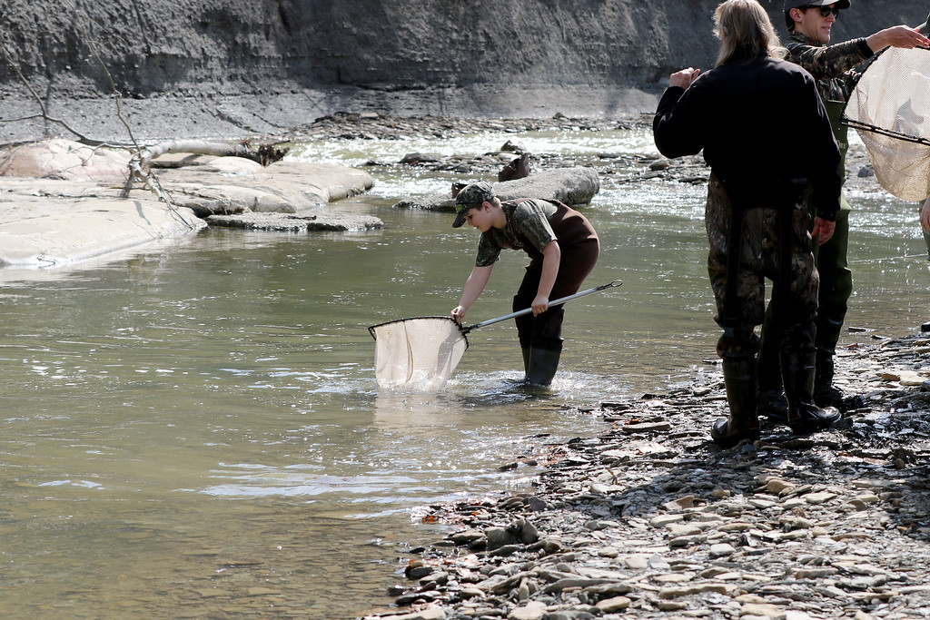 . Jonathan Tressler � The News-Herald <br> A scene from Lake Metroparks� Paine Creek rainbow trout stocking operation April 13 at Indian Point Park in Leroy Township.