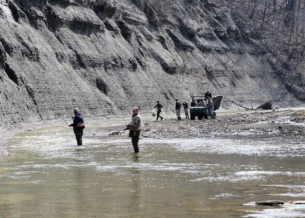 . Jonathan Tressler � The News-Herald <br> Two anglers are fish a few dozen feet downstream from where a net full of steelhead are about to be introduced into Paine Creek at Lake Metroparks� Indian Point Park in Leroy Township April 13.