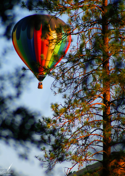 Ballooning the Redwoods