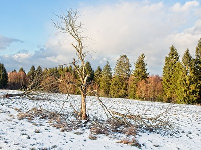 Winter bei Nisterberg
