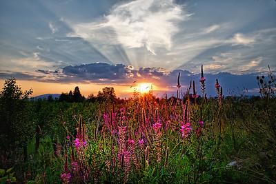 Sonnenuntergang im Au-Biotop Rudersdorf