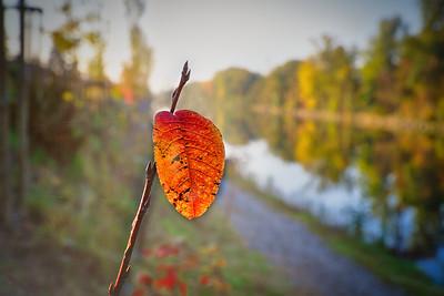 Herbst an der Mur