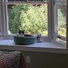 "Stella at her bay window ""observation deck."""
