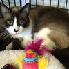 Stella's sister Sylla, now known as Syllabus.  Photo courtesy of Rosemary with Community Cat Rescue.