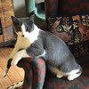 Stella's sister Clarice.  Photo courtesy of Rosemary with Community Cat Rescue.