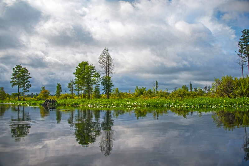 Reflections of a Peaceful Soul Okefenokee Stephen C Foster