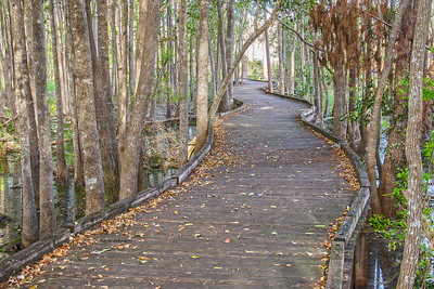 Boardwalk into the Land of the Trembling Earth Stephen C Foster Okefenokee