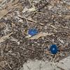 More yard hazards left behind