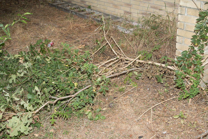 Workers broke my 8 foot oak tree and smaller lantana