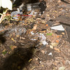 Trash left behind shrub