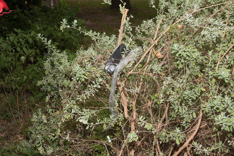Roofing material left on top of shrub by front door