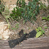 Tar paper left in Flower bed in front of house