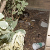 Workers used hidden area behind my shrubs as trash can. leaving cups, water bottles, roofing material, screws,  cigarette butts, etc.