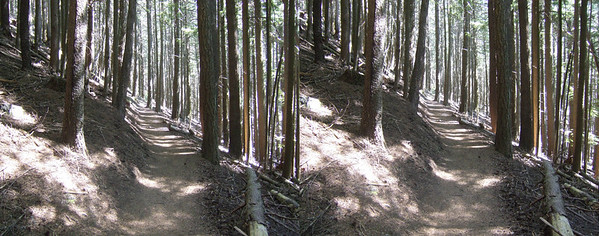 Trail to the top of Mount Constitution on Orcas Island  with in the San Juan Islands
