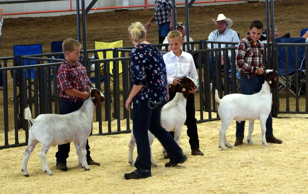. 2017 Catch-It Goat Contest winners show the animals they won and raised at the Logan County Fair Junior Goat Show Wednesday, Aug. 8, 2018.