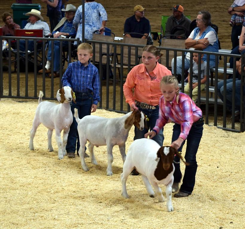 . Logan County Fair Junior Goat Show Showmanship Contest Wednesday, Aug. 8, 2018.