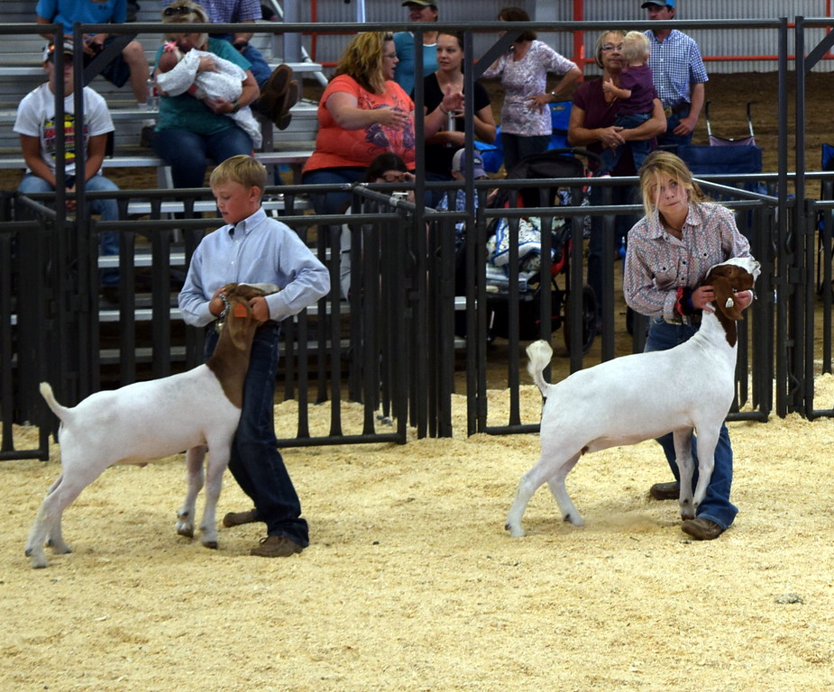 . The top intermediate showman keep a hold of their animals as they watch the judge during the Logan County Fair Junior Goat Show Wednesday, Aug. 8, 2018. Beau Carlson was named grand champion and Amanda Thorpe was reserve champion.