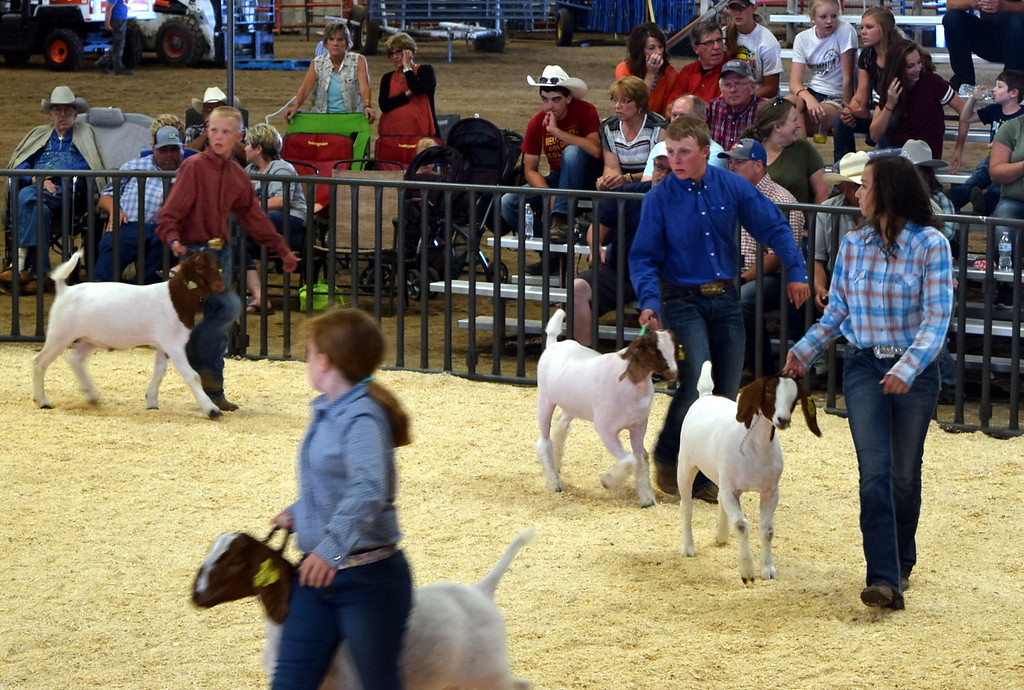 . Middle heavyweight contest Logan County Fair Junior Goat Show Wednesday, Aug. 8, 2018.