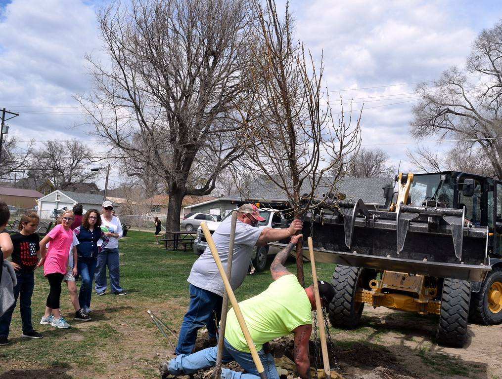 . City of Sterling parks crew members get a tree in place to be planted at an Arbor Day celebration Friday, April 26, 2019, at Monahan Park.