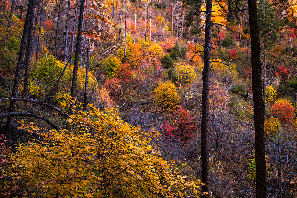 Autumn colors in a burn area in Sterling Canyon, captured from the Sterling Pass Trail