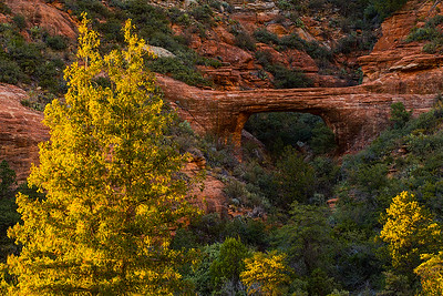 Vultee Arch framed by evening sunlit trees