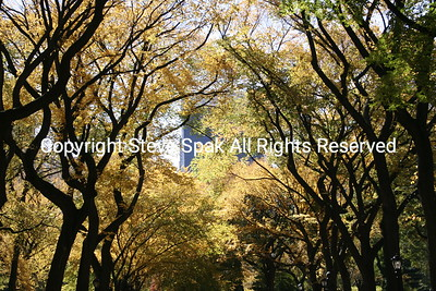 Central Park Fall Trees