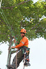 2015 09 30 Taking the Maple Tree Down 60