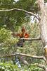 2015 09 30 Taking the Maple Tree Down 53